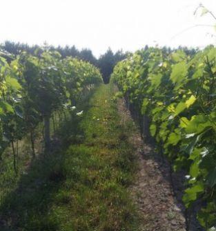 Winnica Rytwiany, zwiedzanie, degustacja, wypoczynek