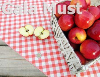 Jabłko odm. Gala Must