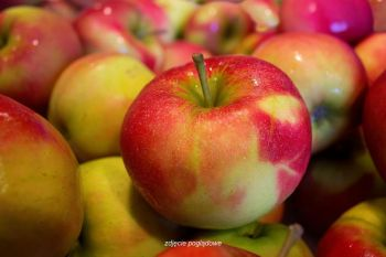 Jabłko odm. Topaz